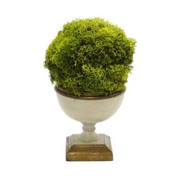 Preserved Moss Topiary in Urn | Wayfair Professional