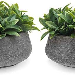 MyGift Mini Artificial Faux Boxwood Plant in Rustic Concrete Pots, Set of 2 | Amazon (US)