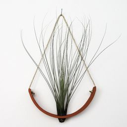 Beautiful Large Terracotta Hanging Air Plant Cradle Wall   Etsy   Etsy (US)