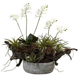 Orchid and Succulent Garden with Driftwood and Decorative Vase | Ashley Homestore