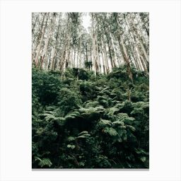 Trees Reaching For The Sky Canvas Print | Fy! (UK)