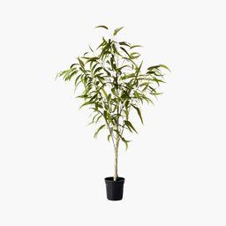 Faux Potted Eucalyptus Tree 5'   CB2   CB2