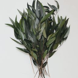 Preserved Weeping Willow Eucalyptus | Afloral (US)