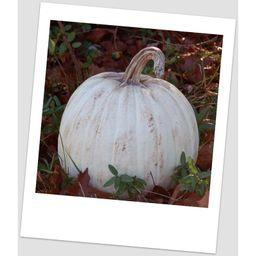 Classic Pumpkin | Wayfair North America