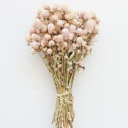 """Air Dried Globe Amaranth in Light Pink - 14-18"""" Tall 