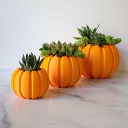 Succulent Pumpkin Planter, Fall Succulent Planter, Autumn Pumpkin Pot, Fall Decor Pumpkin, Thanks... | Etsy (US)