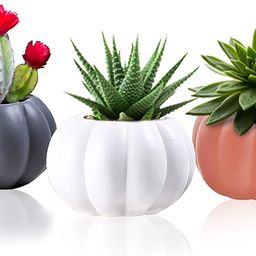 Ceramic Miniature Pumpkin Succulent Pots,Cute Halloween Decorations,Mini Pumpkin Cactus Planters,... | Amazon (US)