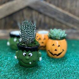 Halloween Pumpkin Jack 'O Lantern  Frankenstein Succulent | Etsy | Etsy (US)