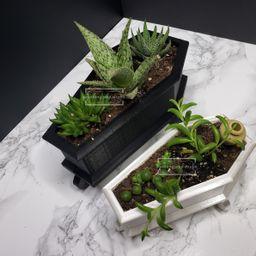 Coffin Mini Planter & Stand Goth Succulent Planter Decor | Etsy | Etsy (US)