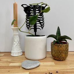 Houseplant trellisSkeletonRib cagePlant | Etsy | Etsy (US)