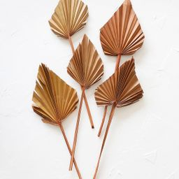 Pack of 5 - Afloral Dried Mini Palm Spears in Terracotta Orange | Afloral (US)
