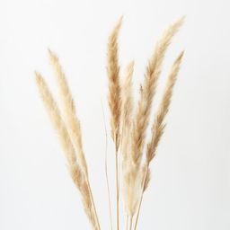 """Pack of 6 - Smooth Natural Tan Pampas Grass - 25-29.5"""" 
