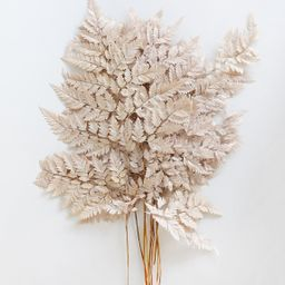 """Pack of 10 - Preserved Flat Fern Leaves in Taupe - 16-20"""" Tall 