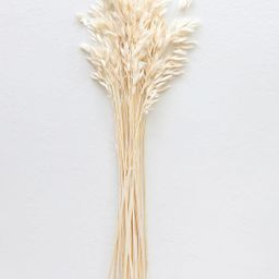"""Cream White Dried Wild Oats - 18-22"""" Tall 