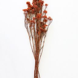 """Terracotta Preserved Rice Flower - 18-26"""" Tall 