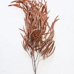 """Preserved Seeded Eucalyptus Branch in Terracotta - 28-32"""" Tall 