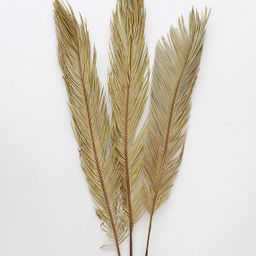 """Dried Natural Cycas Palm -Bundle of 3 - 30-36"""" Tall 