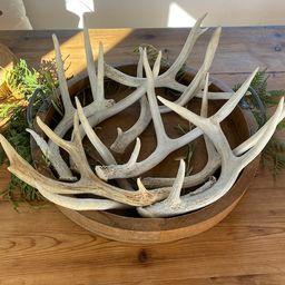 Natural Small Medium and Large Antler Deer Sheds   Etsy   Etsy (US)