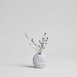 Dried Lavender   Bloomist