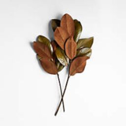 Dried Magnolia Leaf Bunch + Reviews | Crate and Barrel | Crate & Barrel