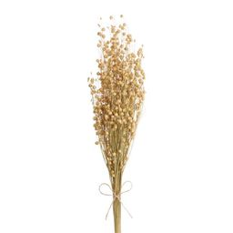 Dried Natural Flax Bunch | World Market