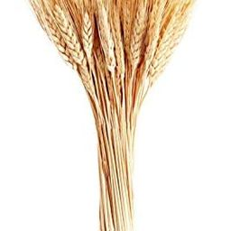 June Fox Dried Wheat Stalks, 100 Stems Wheat Sheaves for Decorating Wedding Table Home Kitchen (1... | Amazon (US)