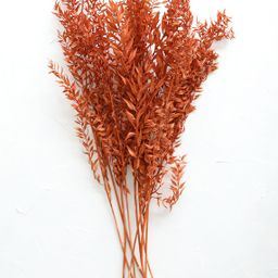 Dried Ruscus Leaves in Terracotta Orange - 8-10 Stems   Afloral (US)
