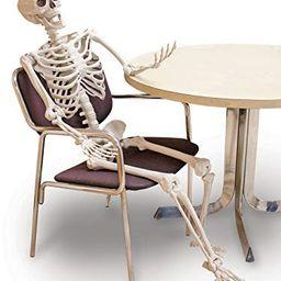 Sunstar Industries Lifesize Pose and Hold Skeleton | Amazon (US)