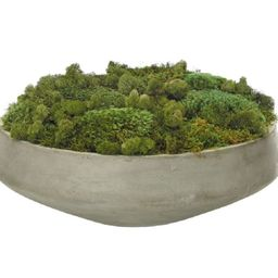MOSS MOUND   Alice Lane Home Collection