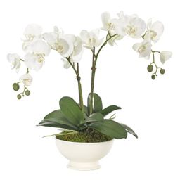 ORCHID   Alice Lane Home Collection