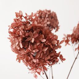 """Mauve Pink Preserved Hydrangea Flowers - 12-16"""" Tall 