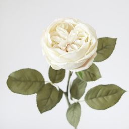 """Silk English Cabbage Rose in Eggshell Cream - 25"""" Tall 