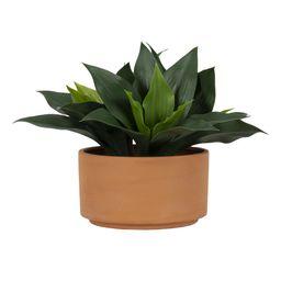 "Better Homes & Gardens Faux Agave Plant in Terracotta Planter, 9.25"" x 9"" - Walmart.com | Walmart (US)"