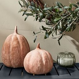Terra Cotta Pumpkins   Pottery Barn (US)