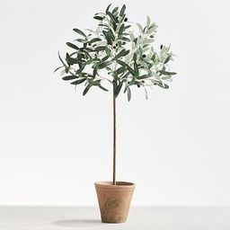 Faux Tall Olive Topiary   Pottery Barn (US)