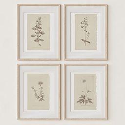Wall Art Botanical Plant Prints   Vintage Flower Boho Minimalist Floral Artwork Decor for Bedroom...   Amazon (US)