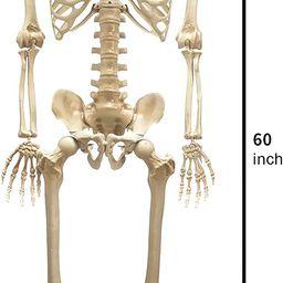 JOYIN 1.5m Halloween Life-Size Skeleton, Full Body Plastic Skeleton with Movable Joint, Human Bon... | Amazon (US)