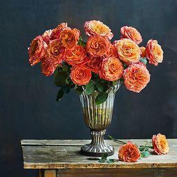 Fresh Free Spirit Roses Bunch, 2 Dozen   Terrain