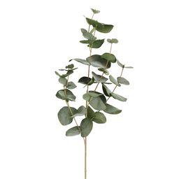 Faux Silver Dollar Eucalyptus Stem by World Market | World Market