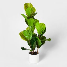 """33"""""""" x 16"""""""" Fiddle Lead Fig Plant In Pot Green/White - Threshold   Target"""