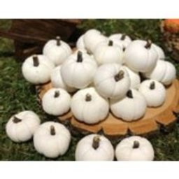 20 Fairy Garden white Pumpkins with willow tree stems, polymer clay, primitive pumpkins, white pumpkins   Etsy (US)