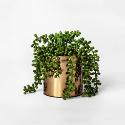 """7"""""""" x 6.5"""""""" Artificial String of Pearls Succulent in Pot Green/Gold - Project 62 