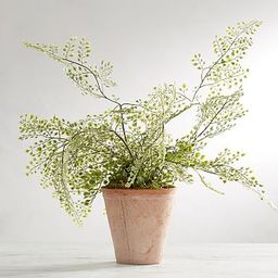 Faux Potted Maiden Hair Fern Houseplant | Pottery Barn (US)