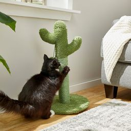 Frisco Cactus Cat Scratching Post | Chewy.com