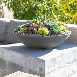 Pure Series Plastic Pot Planter   Wayfair North America