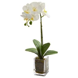 Nearly Natural 24in. Orchid Phalaenopsis Artificial Arrangement in Vase, Cream | Walmart (US)